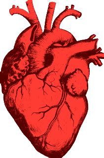 Human heart research papers - Everland Travel